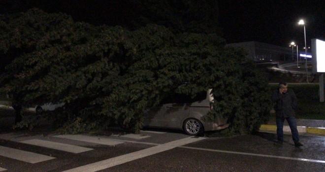 Fırtınayla kopan ağaç aracın üzerine devrildi