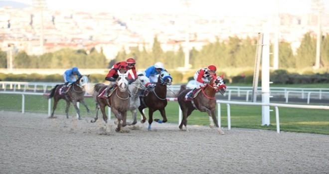 Atlar Güllük için koştu