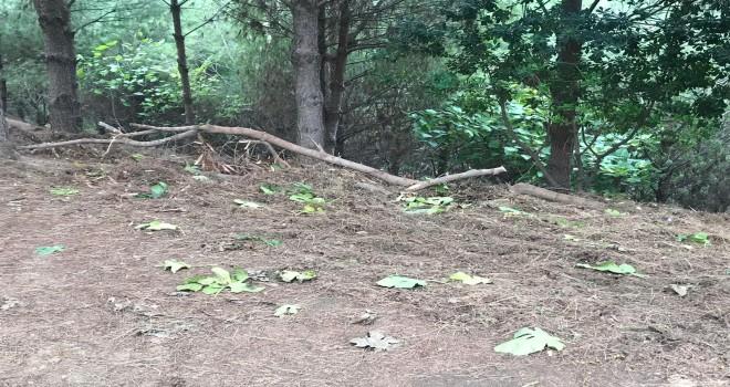 Hastane bahçesinde üzerine ağaç devrildi