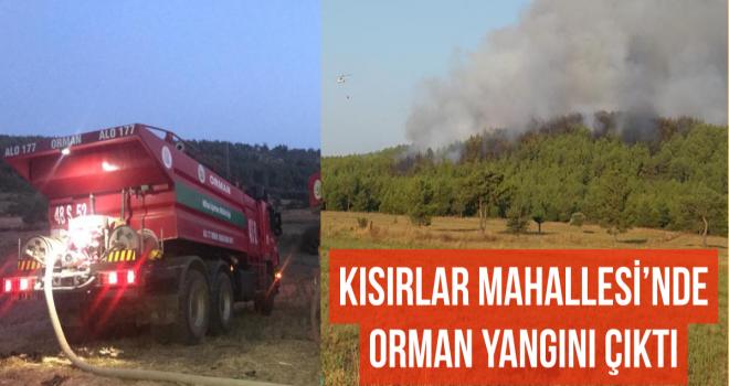 KISIRLAR MAHALLESİ'NDE ORMAN YANGINI ÇIKTI